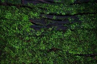 Textura de fundo de musgo de fundo de vegetais lindos na natureza com espaço de cópia