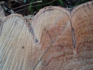 textura de madeira, cortada