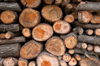 Textura de madeira toras hdr hdr