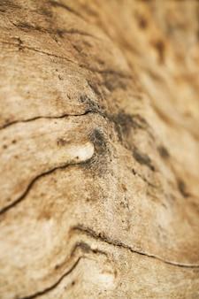 Textura e fundo da árvore