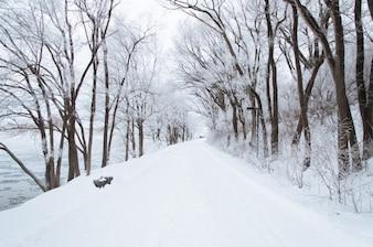 A floresta branco