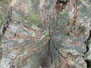 toco de árvore, madeira