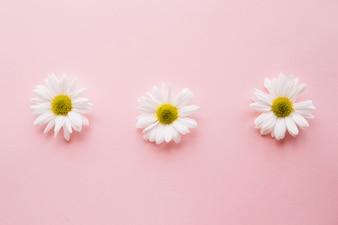 Três estrados em uma linha sobre um fundo rosa claro