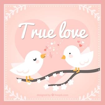Pássaros do amor verdadeiro