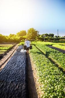 Um agricultor está molhando a fazenda