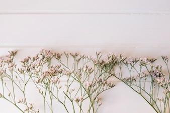 Um monte de pequenas flores em uma fila com espaço no topo