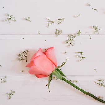 Única rosa rosa com pequenas flores bonitas e fundo de madeira branca