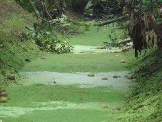 vala de irrigação verde