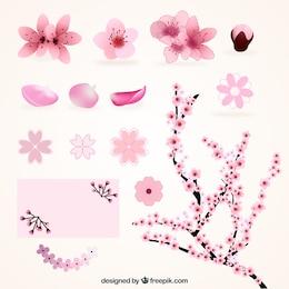 Variedades de flores de cerejeira