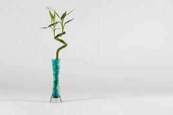 Vaso moderno com bambu