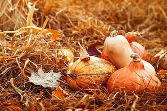 Vegetais coloridos do outono