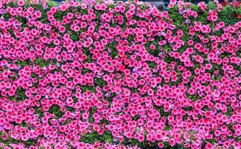 Veia beleza papel de parede colorido padrão crescimento