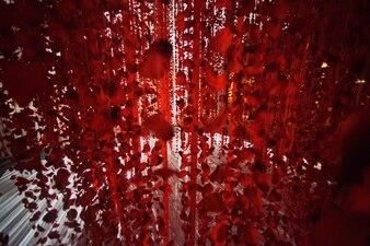 Vermelho, rosa, pétalas, fitas, penduradas, branca, chão