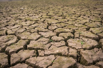 Vista, secado, rachado, lama