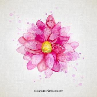 Flor da aguarela em tom de rosa