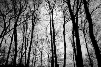 Zona escura na floresta