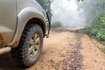 Autoreifen auf Feldweg mit dem Stamm eines umgestürzten Baums in einem Wald.
