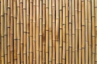 Bambus Textur