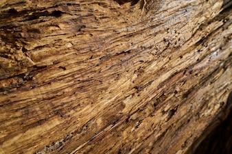 Baum Textur und Hintergrund