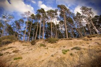 Bäume aus den Hügel hinunter gesehen