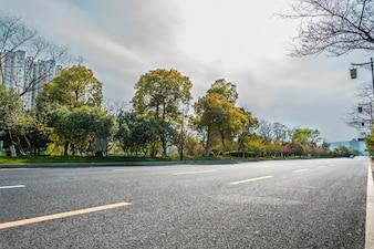 Bäume von der Straße aus gesehen