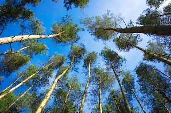 Bäume von unten gesehen