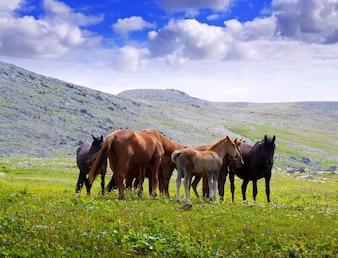 Berge Landschaft mit Herde von Pferden