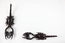 Black Scorpion Paar beängstigend