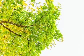 Blätter bunte orange Pflanze golden