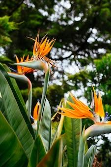 Blumenvögel des Paradieses