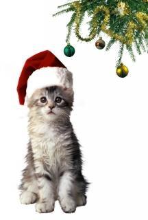 kostenloser cat beste kostenlose