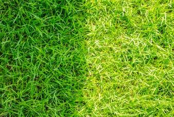 Close-up Bild von frischem Frühling grünes Gras.