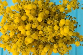 Close-up von gelben Blüten