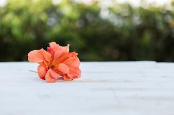 Dekorative orangefarbene Blumen mit unscharfem Hintergrund