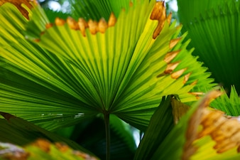 Detail Textur Waldpark Kuala Lumpur