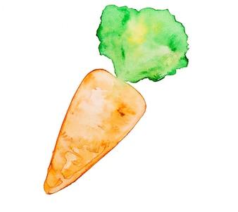 Diät frische vegetarische Karotte reif
