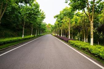 Die schöne Straße ist von viel Grün umgeben