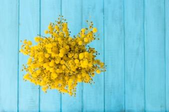 Draufsicht der gelben Blüten mit blauem Hintergrund