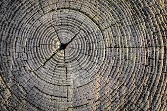 Eiche strukturierte natürliche Knotenstruktur