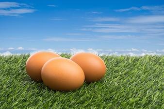 Eier auf grünem Gras am blauen Himmel Hintergrund