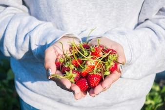 Erdbeerfrüchten