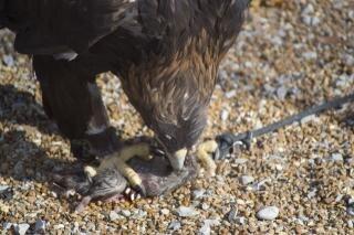 kostenlos vögeln Essen