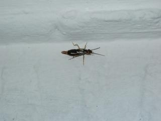 Insekten krabbeln an der wand download der kostenlosen fotos - Ameisen in der wand ...