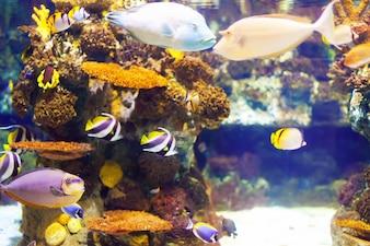 Fisch am Korallenriff