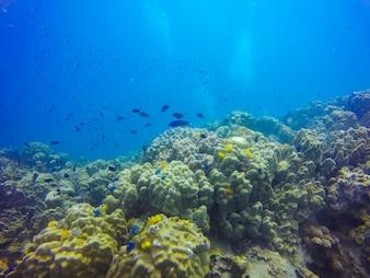 Fisch Lagune Sonnenlicht exotische Tier