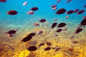Fische im Korallenriffgebiet
