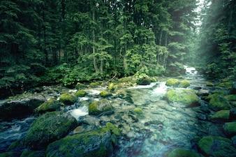 Fluss im dunklen Wald.