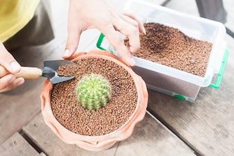 Gartenkaktus in Topfpflanzen