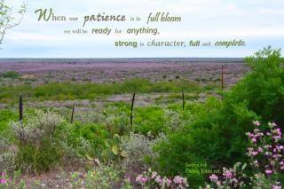 Geduld in voller Blüte