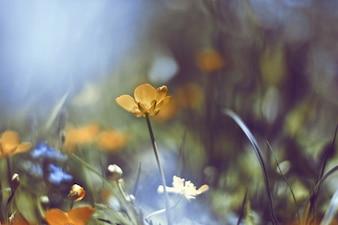 Gelbe Blume mit diffusen Hintergrund